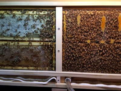 Permanent Observation Hive in home