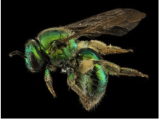 March MCBA Meeting Recap: Tim McMahon, How Do Honey Bees Differ from Other Bees?