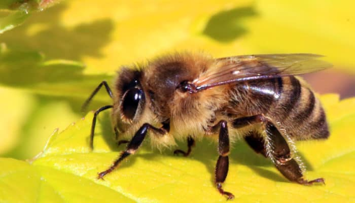 Beekeeping Class for Beginners – Montgomery County