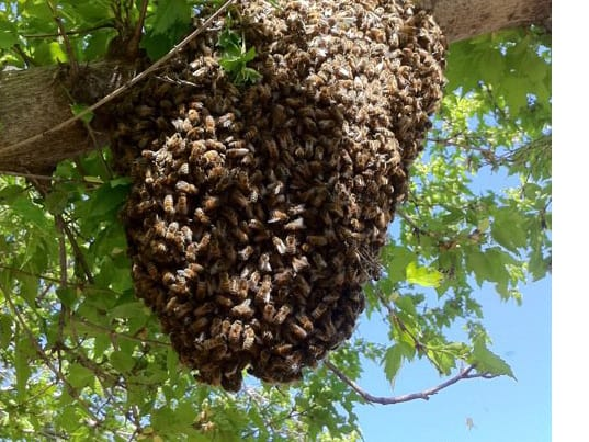 Report Unwanted Bees – Montgomery County Beekeepers Assoc , Maryland